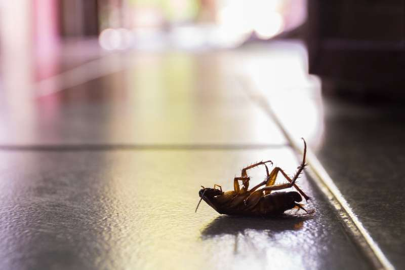 emergency pest services in Blacksburg