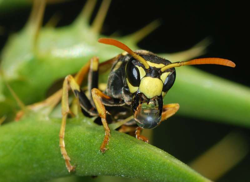 professional pest control in Low Moor