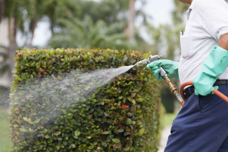 best home pest control in Brucetown