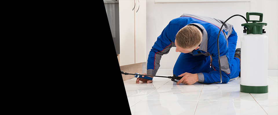 24 Hr Pest Control Services
